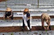 BMKG Adakan Sekolah Lapang Iklim untuk Jaga Stabilitas Produksi Cabai di Jateng