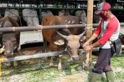 PD Dharma Jaya Datangkan 1.000 Sapi ke Jakarta untuk Kurban
