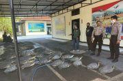 36 Ekor Penyu Langka Diselundupkan ke Bali