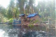 Penjarahan Hutan Dekat Taman Nasional Danau Zamrud Kian Menjadi