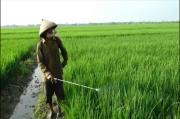 Pupuk Langka, Petani Kendal Gunakan Penyedap Rasa Makanan