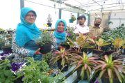 Kampung KB Lingga Asri Kembangkan Wisata Bunga di Era New Normal