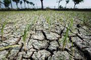 BMKG: 64% Wilayah Tanah Air Sudah Memasuki Musim Kemarau