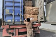 Talaud Ekspor 6 Ton Serat Abaka ke Jepang, Jadi Bahan Baku Uang Kertas