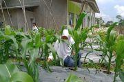 SMK Pertanian Ansoruna Hade Rancage Purwakarta Cetak Petani yang Nyantri
