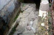 Kesal Hasil Panen Sering Rusak, 2 Monyet Tewas Diracun Oknum Warga