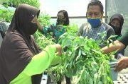 Ketahanan Pangan: Emak-emak Panen Sayur Mayur dan Ikan Dibagi Gratis untuk Warga