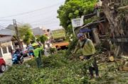 Bahayakan Petugas Dapur Umum Korban Kebakaran, Dua Pohon Beringin Raksasa Ini Dipotong
