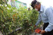 Sleman Kembangkan Varietas Cabai Rawit Prima Agrihorti
