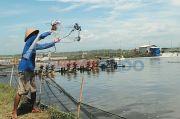 Luhut Geber Perizinan Lahan Tambak untuk Tegakkan Ekspor Si Bungkuk