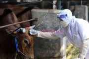 Lebaran Tahun Ini, Sapi Kurban Presiden untuk Sulsel Diambil di Maros
