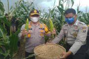 Kapolda dan Gubernur Riau Panen Sayuran di Areal 13 Hektare