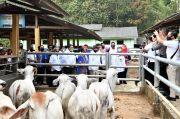Ditawari Modal Koperasi Rp2 Miliar, Peternak Sapi di Lampung Happy