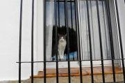 Kasus Pertama di Inggris, Kucing Peliharaan Positif Covid-19