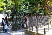 Senangnya Melihat Kebun Binatang Surabaya Bisa Kembali Dibuka