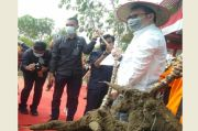 Lahan Gambut Karhutla di Kampar Riau Disulap Jadi Hutan Singkong