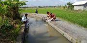 Dinas Perikanan Denpasar Tebar 20.000 Benih Ikan Nila