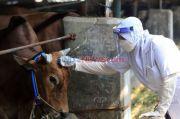 Perayaan Idul Adha saat Covid-19 Timbulkan Risiko Lebih Besar