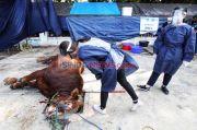Bahaya Zoonosis Mengintai, Waspadai Kesehatan Hewan Kurban