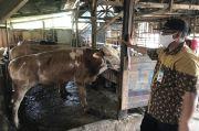 KPKP Jakarta Utara Temukan 19,5 Kg Jeroan Tidak Layak Konsumsi