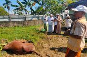 DPD PDIP Kalbar: Jadikan Idul Adha Momentum Tingkatkan Solidaritas Sosial