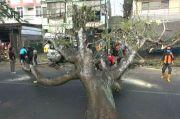 Pohon Trembesi Tua 20 Meter Tumbang, 3 Warga Luka dan 4 Kendaraan Rusak