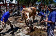 PDAM Makassar Bagikan Daging Kurban ke Panti Asuhan dan Pondok Tahfiz