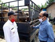 PT Inalum Berikan Bantuan 20 Ekor Sapi Kurban untuk 16 Desa di Batubara