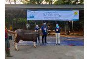 PLN UP3 Bekasi Distribusikan 1.000 Kantong Daging Kurban untuk Masyarakat