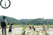 Maksimal Potensi Pertanian Pesisir Selatan Lewat Proyek IPDMIP