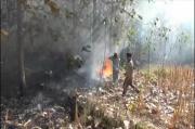 Kebakaran Hebat Melanda Lahan Hutan Perhutani di Ponorogo