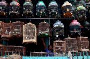 Memburu Burung Berprestasi untuk Mencetak Laba dari Anakan Berkualitas