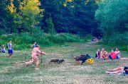 Viral, Pria Telanjang Kejar Babi Hutan yang Gondol Laptopnya