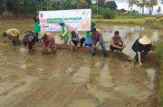 Dompet Dhuafa Siap Tanami 1.000 Hektare Sawah Produktif