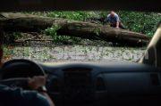 Hujan Deras Angin Kencang, Pohon Depan Istana Merdeka Tumbang
