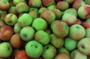 Hati-hati! Memakan 20 Biji Apel Bisa Membahayakan Tubuh karena Mengandung Sianida