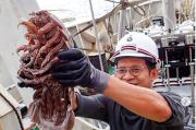 Kenalkan, Ini Bathynomus Serangga Raksasa dari Laut Jawa