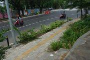 Baru Tayang, Proyek Pedestrian Tanjung Bunga Sudah Diminati 27 Kontraktor