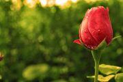 Tips Sehat dan Cantik dari Aisyah, Istri Rasulullah