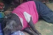 Babi Ajaib di Muratara, Tidur pun Harus Dikasih Bantal dan Selimut