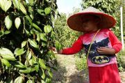 Kabar Positif, Petani Babel Bisa Jual Lada di Pasar Lelang Komoditas