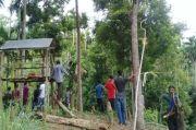Gajah Liar Berkeliaran, Warga Aceh Tak Berani Berkebun