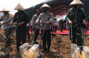 Jaga Ketahanan Pangan, Altar 89 Kompak Tanam Jagung di Subang