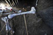 Tulang Belulang Raksasa Berceceran, Arkeologi Temukan Sarang Gajah Purba