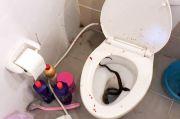 Asyik Main Smartphone di Toilet, Penis Remaja Ini Digigit Ular