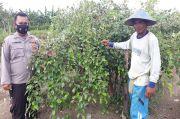 Apel Putsa Tumbuh Subur di Nimbokrang Jayapura