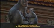 How to Act Like Hooman: Saat Monyet Pengen Jadi Orang Kota