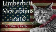 Politikus Terlalu Korup, 5 Kucing Ini Dicalonkan dan Diangkat Jadi Pejabat