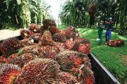 Dukung PEN, PTPN V Tingkatkan Produksi Sawit