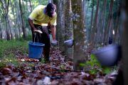 Tetesan Getah Karet, Tumpuan Hidup Masyarakat Perkebunan
